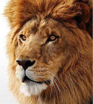 28-Mac-OS-X-Lion